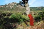 Los Alcornocales - El Picacho