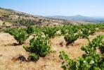 La Movida, viñas de más de sesenta años plantadas sobre suelo de pizarra